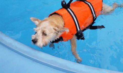 プールで泳ぐジョン
