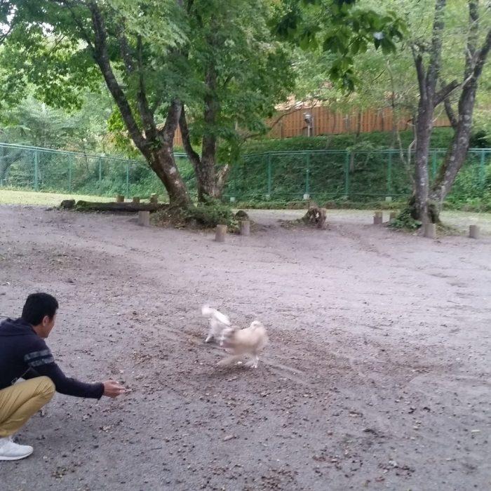 高山わんわんパラダイスホテルのドッグランで遊ぶワンコ(犬)